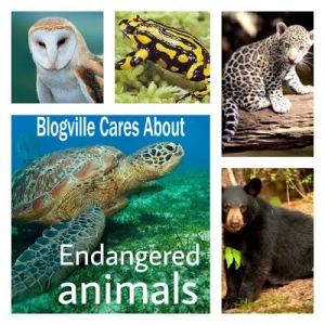 endangered-collage