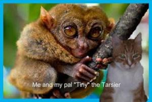 endangeredtarsierposter
