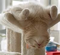 sleepycat1