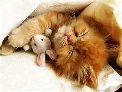 sleepycat2