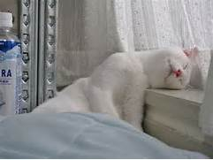 sleepycat3