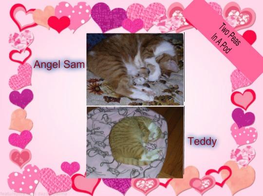 teddyandsammy